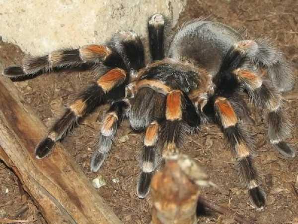 Nằm mơ thấy nhện là điềm hên hay xui ? Đánh số mấy trúng ?